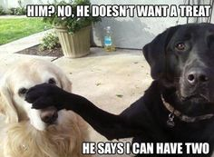 funny labs