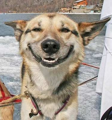 Happy Dogs Smiling And Just Like That… ...