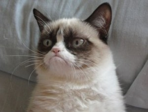 serious grumpy cat