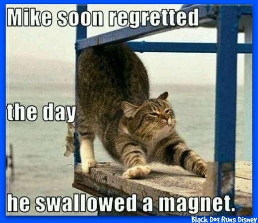 Friday Funny 12-cat