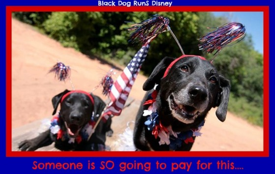 patriotic-animals1