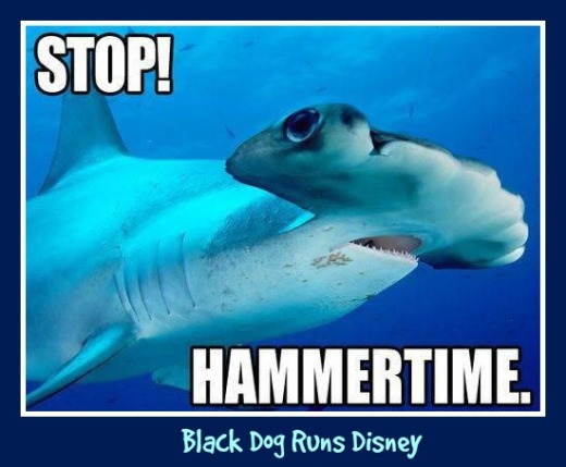 Friday Funny Shark