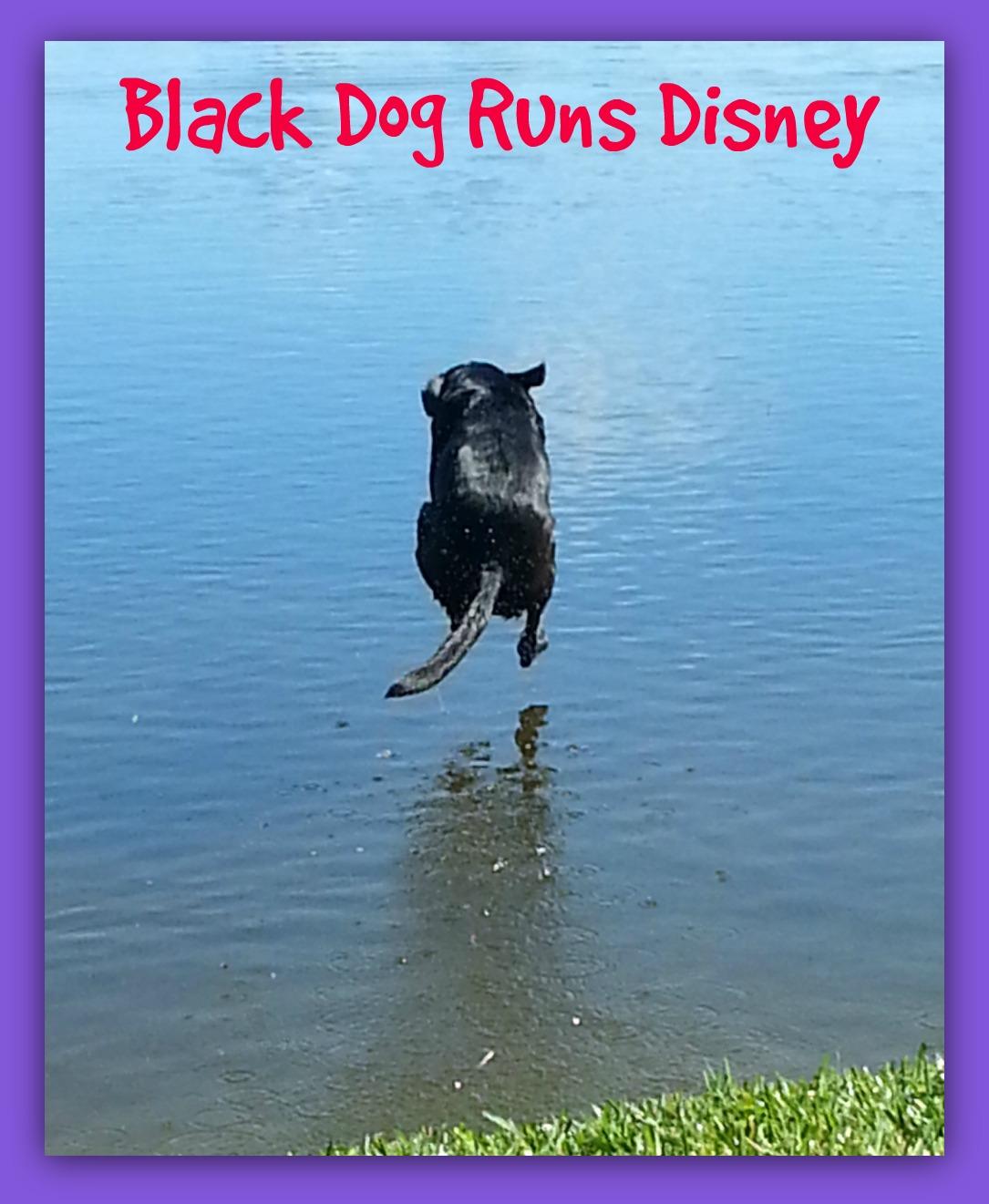 The black dog runs at night dwh 5