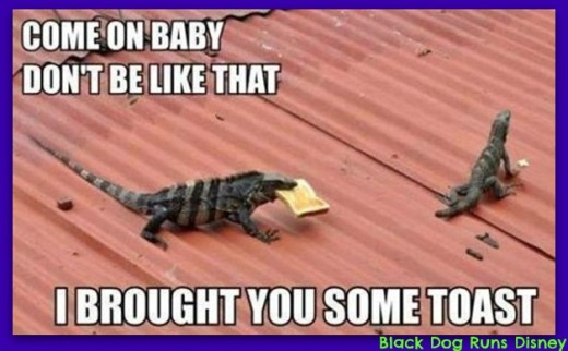 Friday Funny Lizards