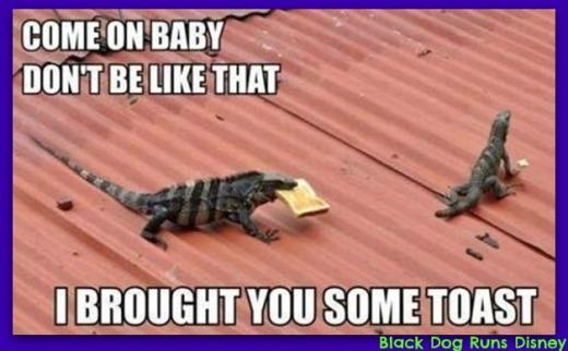 Friday Funny Lizards