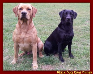 male labs