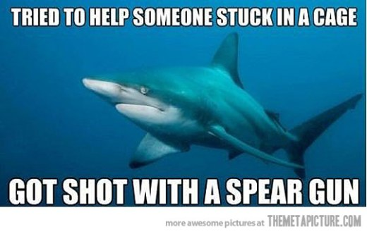 funny-sad-Shark-crying-ocean