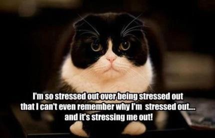 stress cat