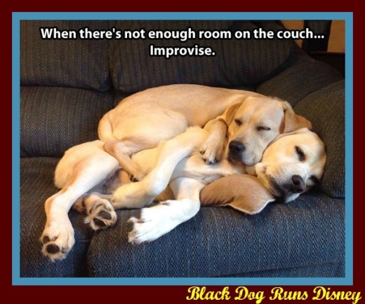 WMW couch dogs2