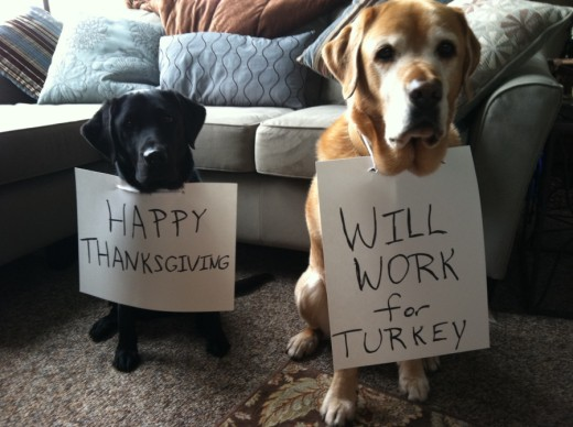 Happy-Thanksgiving Labs