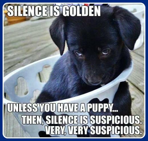 WMW Puppies 1