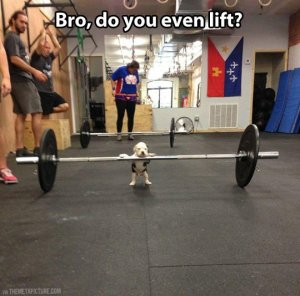 funny-puppy-gym-weights