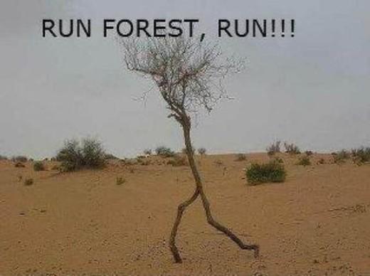 Run_Forrest_Run
