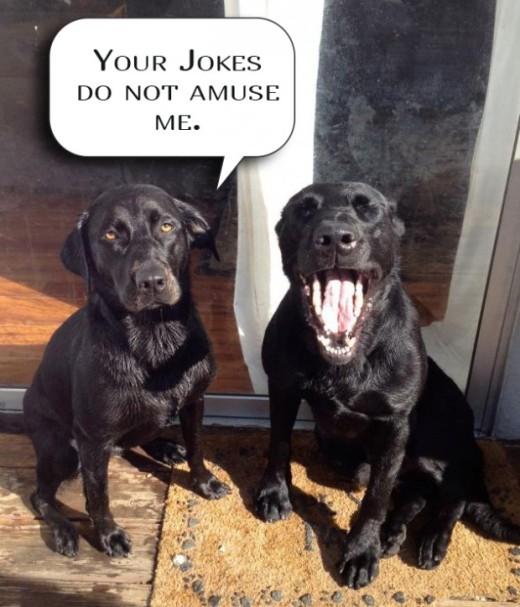 WMW joke dogs
