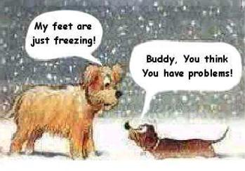 FF Winter dogs