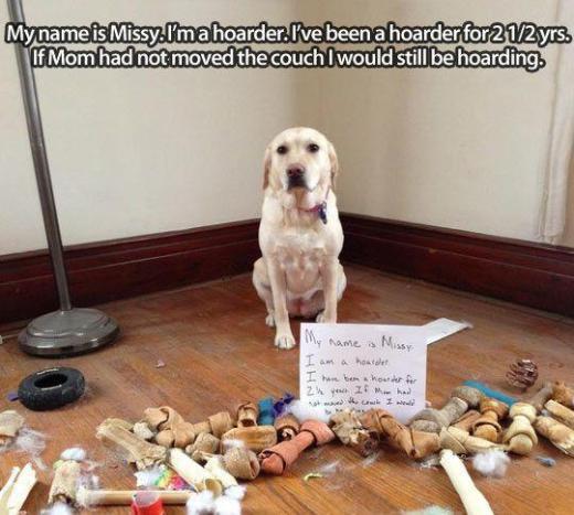 Hoarder dog