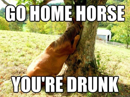 drunk-horse
