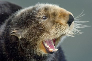 "Oh Black Dog, you ""otter"" make me laugh!"