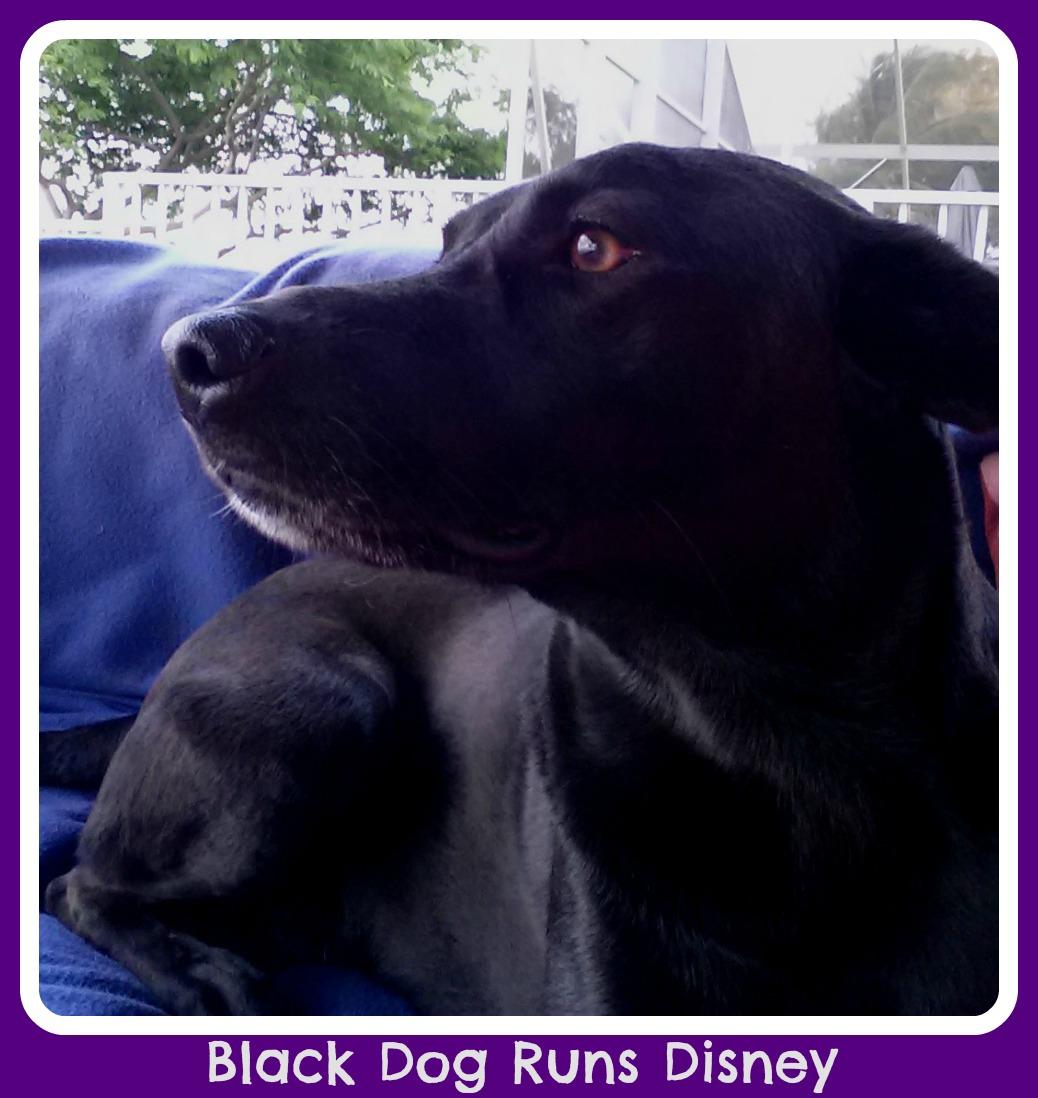 The black dog runs at night dwh 4