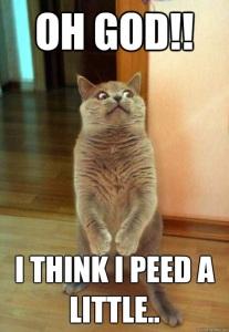 pee cat