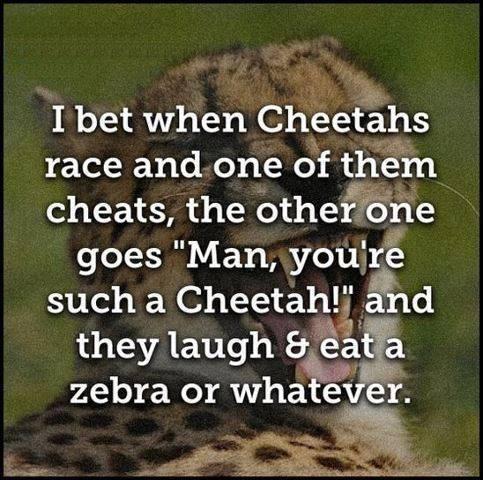 FF Cheetah