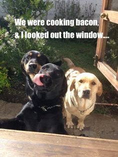bacon dogs
