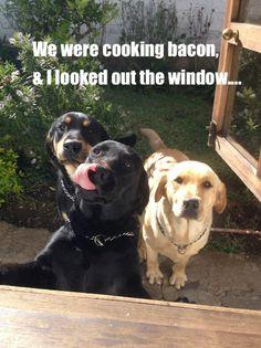 bacon dogs