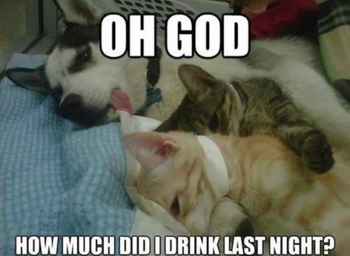 WMW Drunk Dog