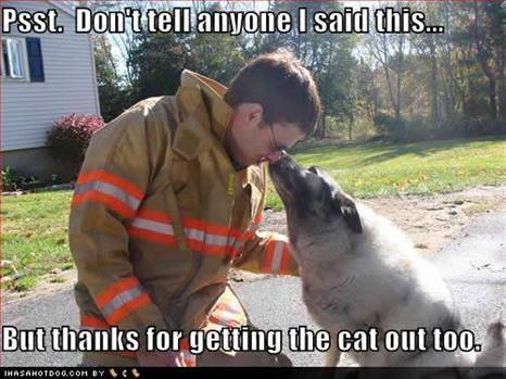 WMW Fireman Cat rescuer