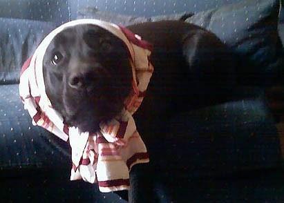 WMW Dog Babushka