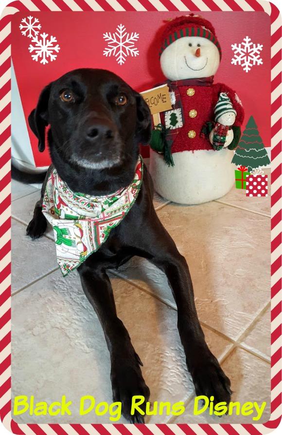Christmas 2015 1