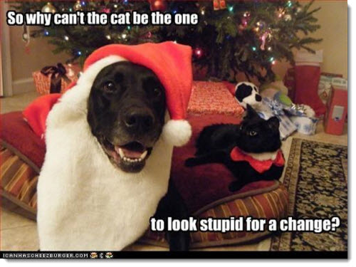 FF christmas-dog-cat-stupid-for-a-change
