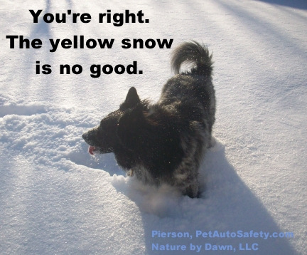 pierson-eating-yellow-snow-funny-caption1
