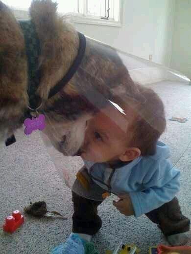 WMW Cone dog