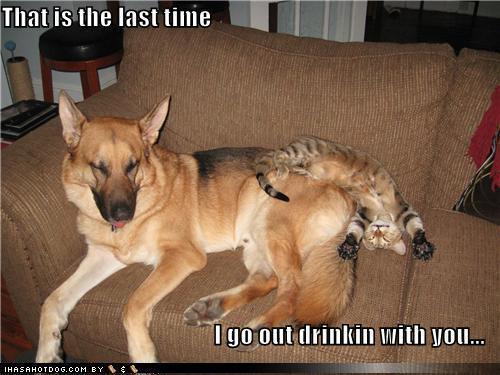 WMW Drunk Dog and Cat