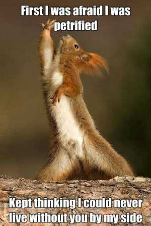 FF Squirrel