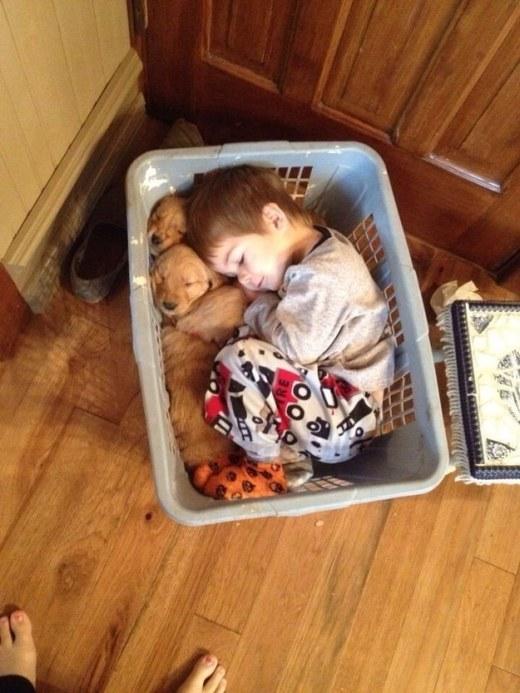 WMW Laundry pups