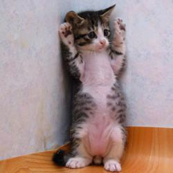 hands up kitty