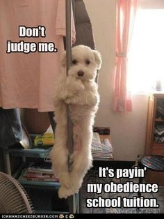 WMW pole dancing
