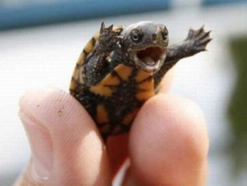 yay turtle