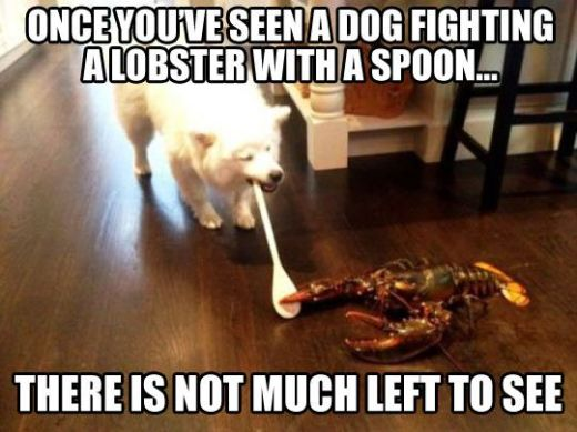 WMW lobster dog