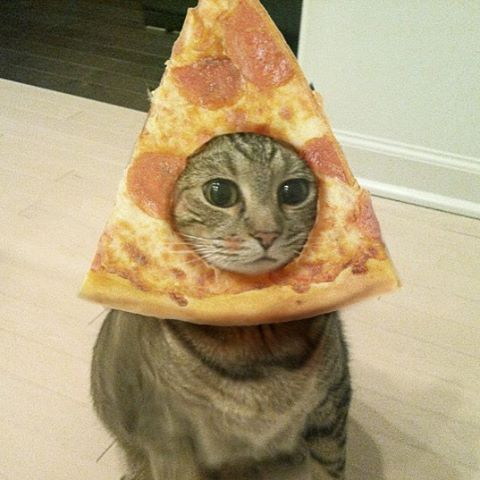 FF Cat-with-pizza-on-face
