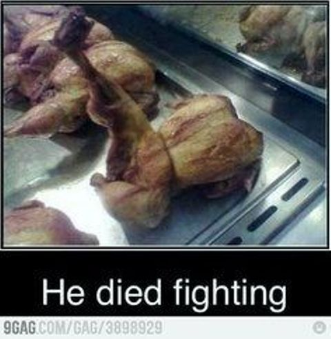 FF fighting chicken