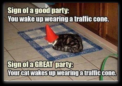 FF Cone Cat1
