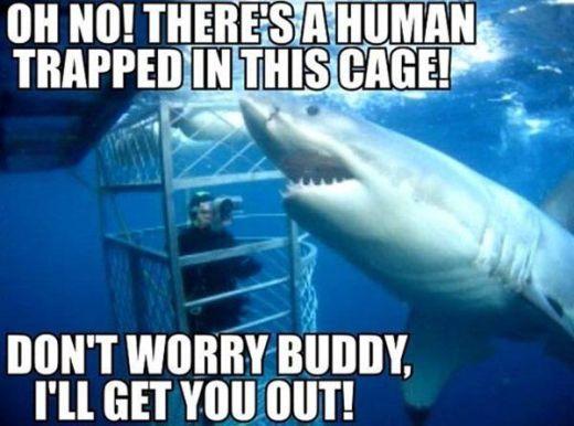 FF Shark cage