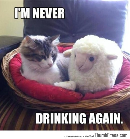 FF cat lamb