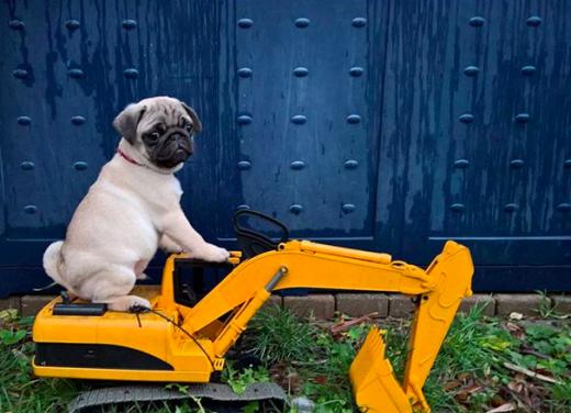 WMW construction pug