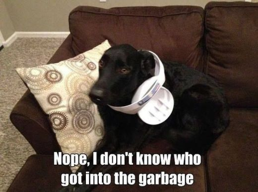 WMW garbage dog