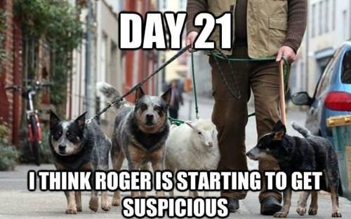 WMW suspicious
