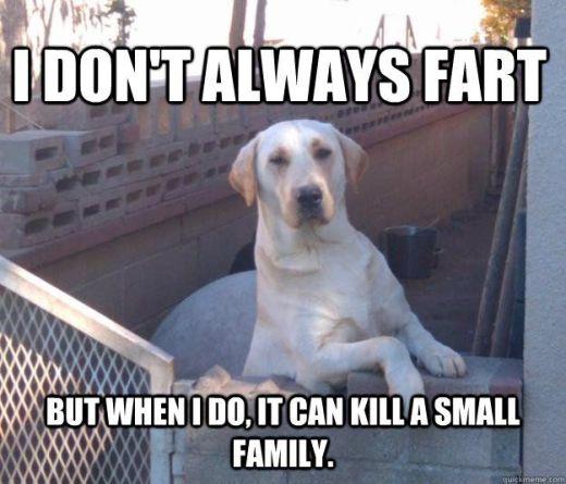 WMW fart dog